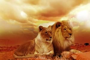 africa-animals-dusk-40756