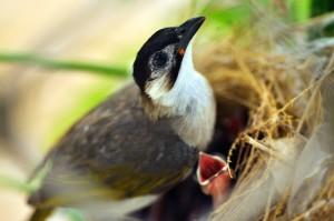 bird-s-nest-birds-9913