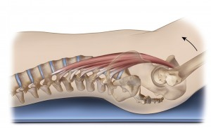 psoas laying down