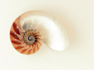 nautilus-shell-shimmer-silver