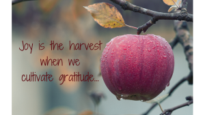 Joy is the harvest when we cultivate gratitude