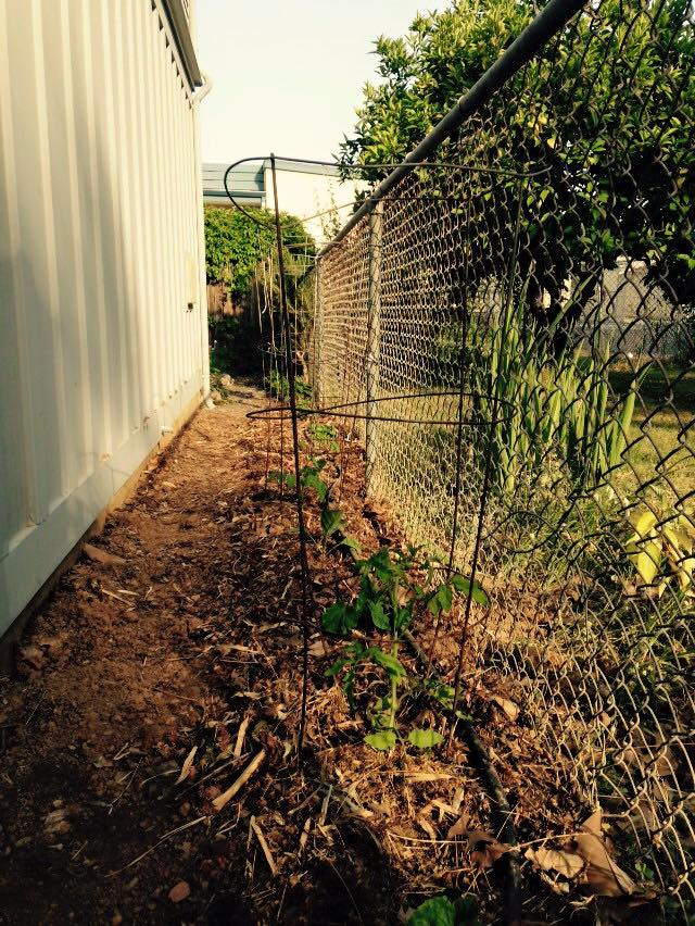 literally cultivating space…..5-13-15