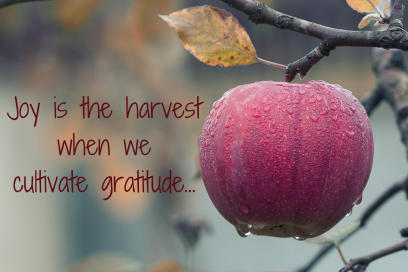 joy is the harvest…11-27-18